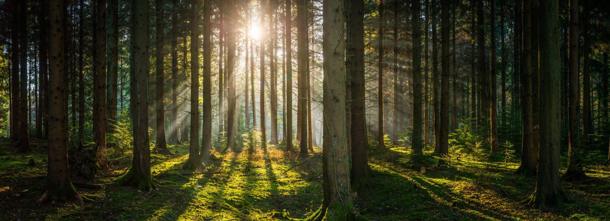 Raus aus dem Wald mit objektiven Bewertungsmethoden